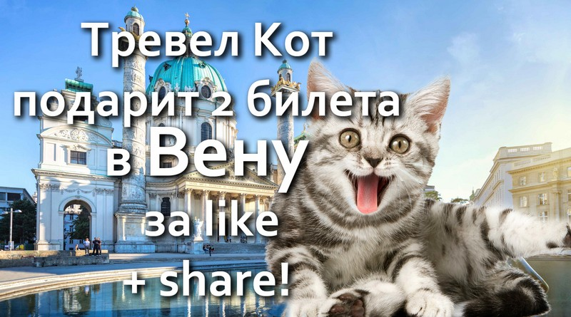 vienna-travel-cat-fb-800